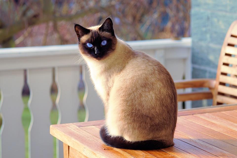 Le collier gps pour chat, une surveillance sur localisation